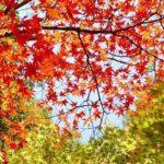 春分の日、秋分の日はいつ?2021年、2020年など直近5年分の日付まとめ