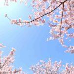 秋葉原駅周辺の桜・お花見スポットまとめ